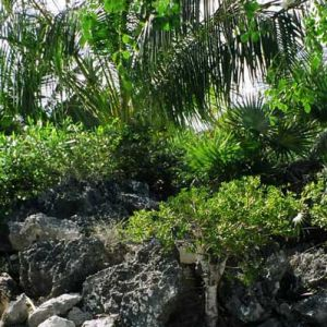 Emerald Shores Nooks and Crannies